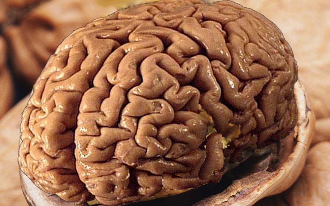 Top 10 Brain Foods for Your Child (and You!)