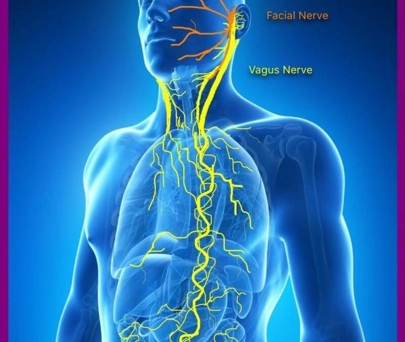 Many Chronic Diseases Linked To Altered Function Of This Single Nerve