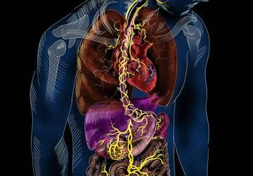 Neck and Spinal Health Linked to Digestive Problems